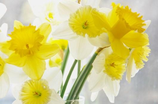 daffodils_BLOG