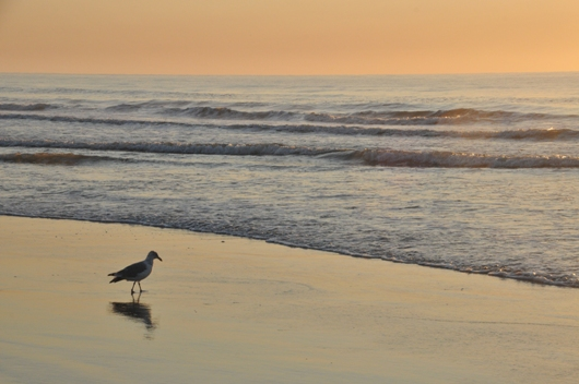 sunrise_gull_stone_harbor_BLOG