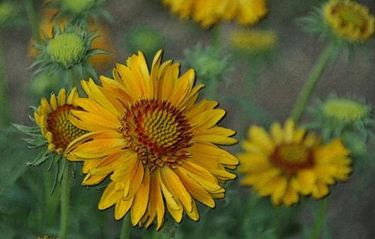 yellow_flower_aps_BLOG