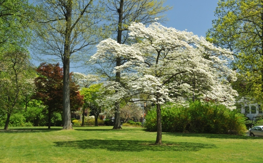 barclay_grounds_spring_2013_BLOG2