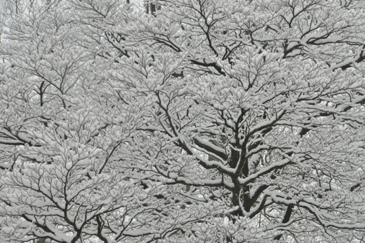 snow_on_barclay_tree_BLOG