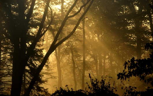 crepuscular_rays_in_woods_BLOG