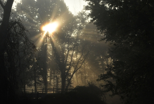 sunrise_woods_BLOG